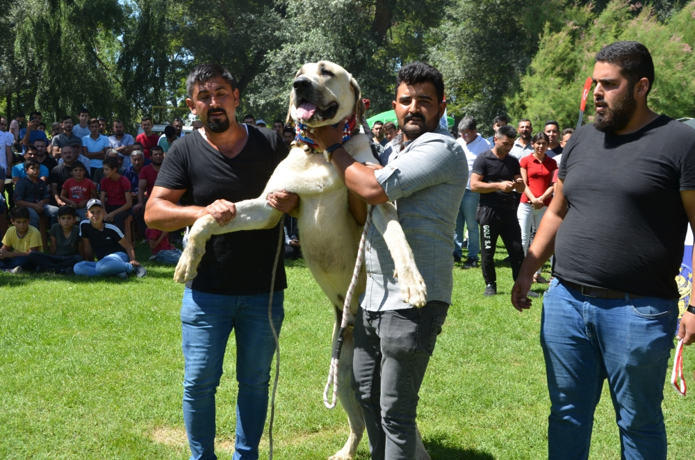 Köpek Irk Standartları Türkiye Şampiyonası 1