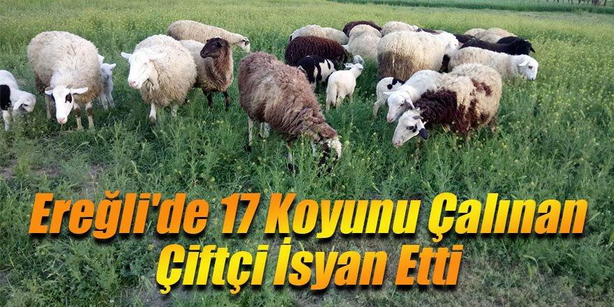 Ereğli'de 17 Koyunu Çalınan Çiftçi İsyan Etti