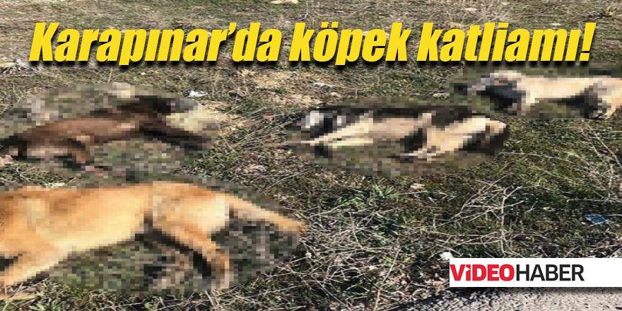 Karapınar'da köpek katliamı!