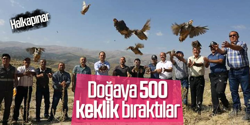 Kınalı Keklikler Halkapınar'da Doğaya Bırakıldı