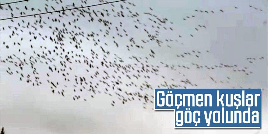 Göçmen kuşlar göç yolunda