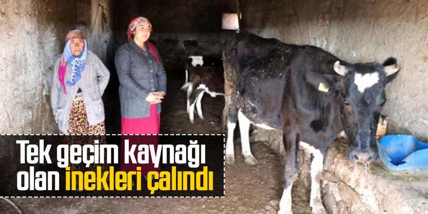 Tek geçim kaynağı olan inekleri çalındı