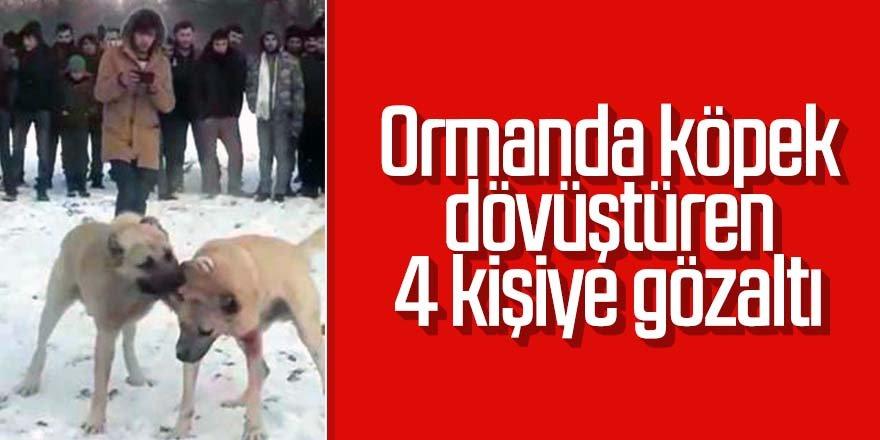Ormanda köpek dövüştüren 4 kişiye gözaltı