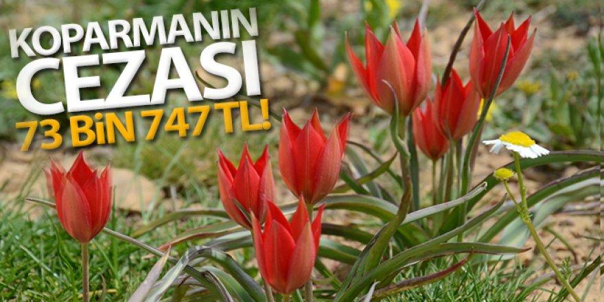 Manisa Lalesi