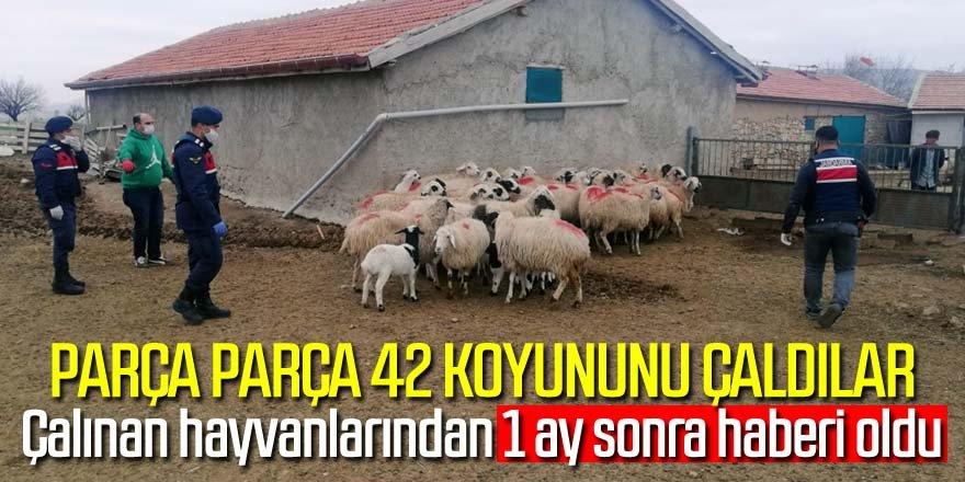 JASAT ekipleri çalınan 42 koyunu ele geçirdi
