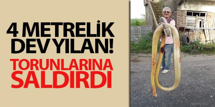 Dev yılanı tüfekle öldürdü