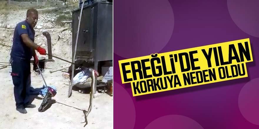 Ereğli'de yılan korkuya neden oldu