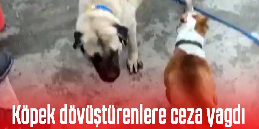 Köpek dövüştüren 3 kişiye 50 bin TL ceza
