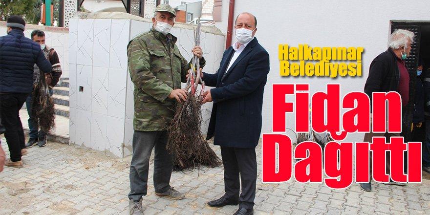 Konya Büyükşehir Belediyesi ve Halkapınar Belediyesi Fidan Dağıttı