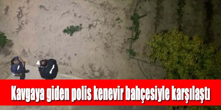 Kavgaya giden polis kenevir bahçesiyle karşılaştı