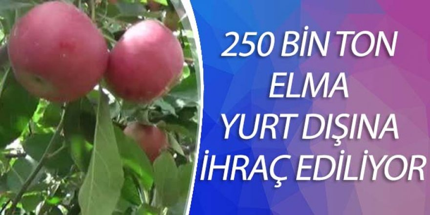 250 BİN TON ELMA YURT DIŞINA İHRAÇ EDİLİYOR