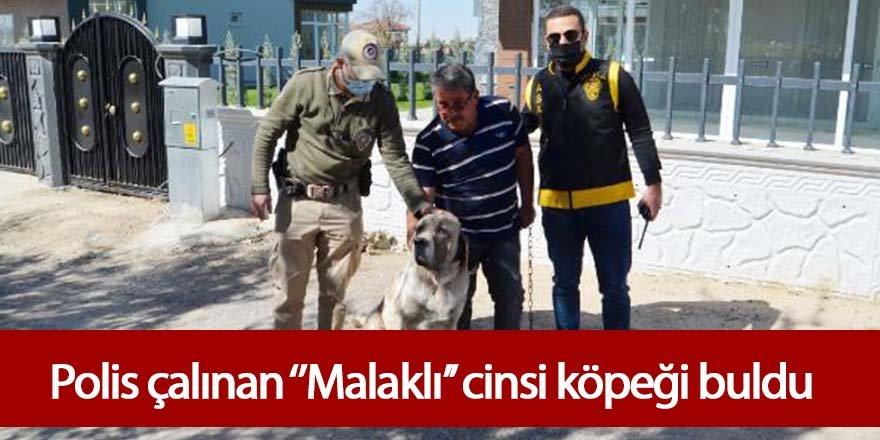 POLİS, ÇALINAN 'MALAKLI' CİNSİ KÖPEĞİ 20 SAATLİK KAMERA GÖRÜNTÜSÜ İZLEYEREK BULDU