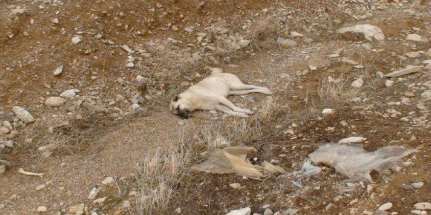 Ereğli'de Köpek Katliamı