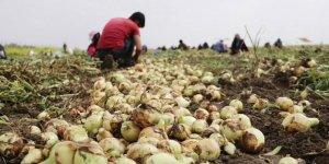 Tarım ÜFE  Aralık'ta yıllık yüzde 16,07 arttı