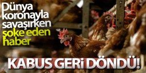Japonya'da kuş gribi paniği