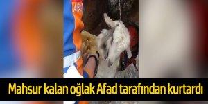 Kayalıklarda mağaraya düşen oğlak AFAD ekipleri tarafından kurtarıldı