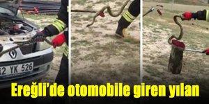 Ereğli İtfaiyeden yılan kurtarma operasyonu