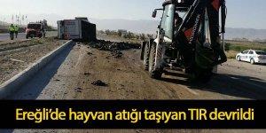 Ereğli'de hayvan atığı taşıyan TIR devrildi