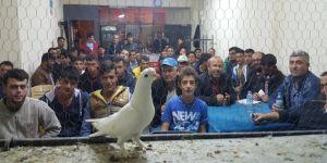 Karapınar'da Evcil Güvercin Meraklıları