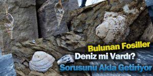 TOROSLARDA BULUNAN FOSİLLER DİKKAT ÇEKTİ?...